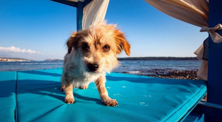 Dog beaches 9
